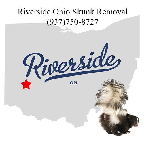 riverside ohio skunk removal