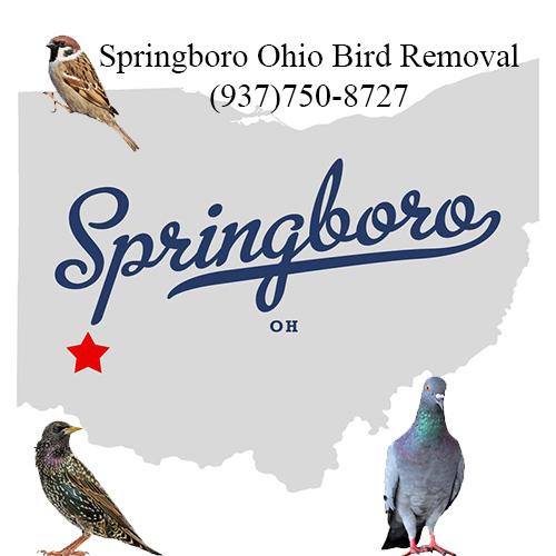 springboro ohio bird removal
