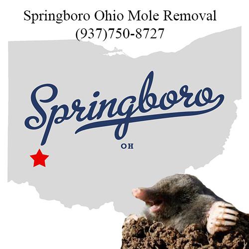 springboro ohio mole removal