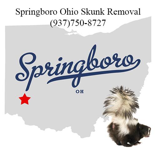 springboro ohio skunk removal