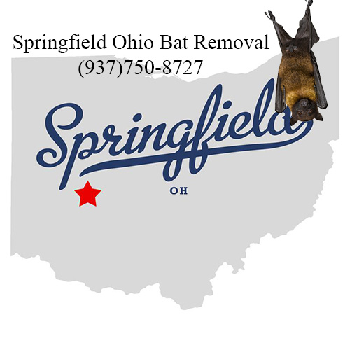 springfield ohio bat removal