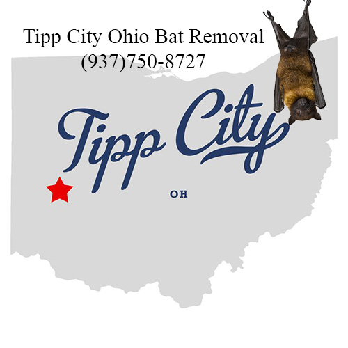 tipp city ohio bat removal