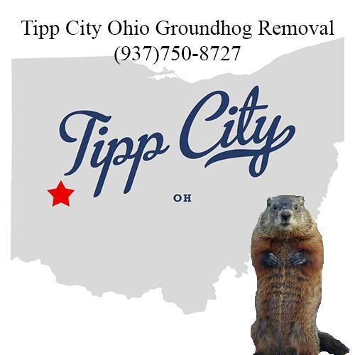 tipp city ohio groundhog removal