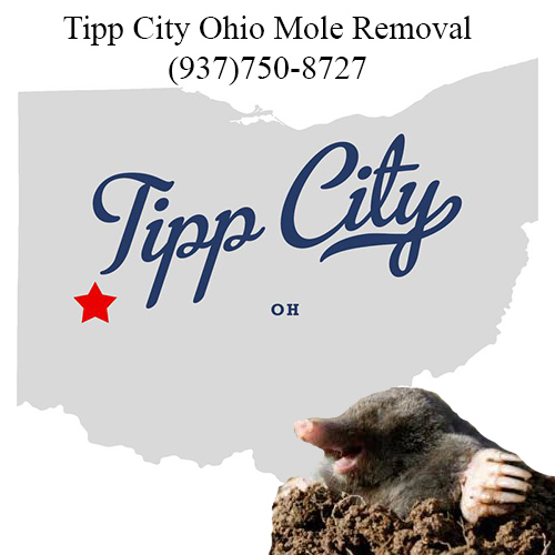 tipp city ohio mole removal