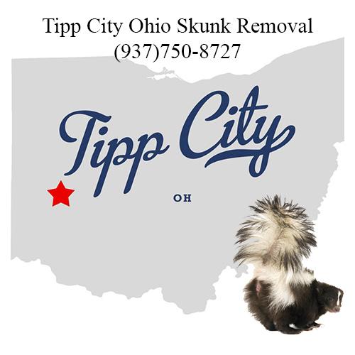 tipp city ohio skunk removal