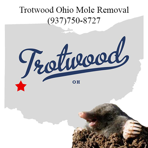 trotwood ohio mole removal