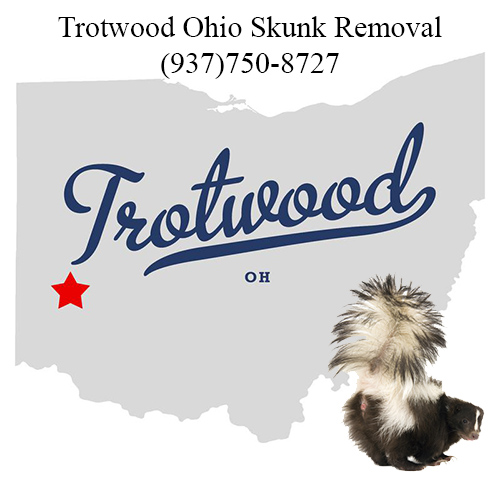 trotwood ohio skunk removal