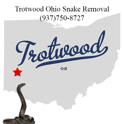 trotwood ohio snake removal
