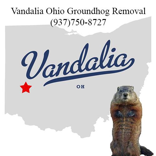 vandalia ohio groundhog removal