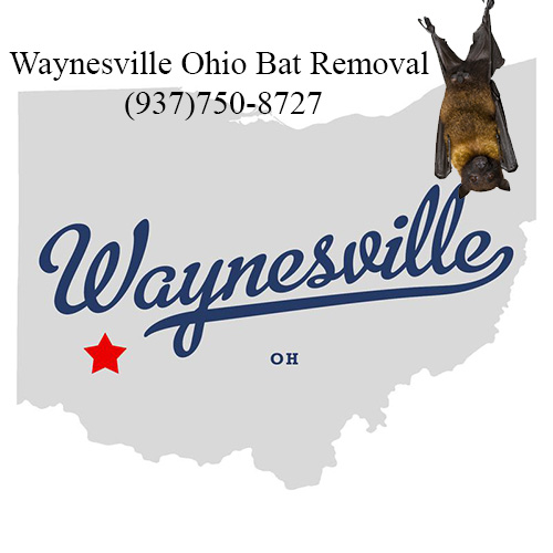 waynesville ohio bat removal