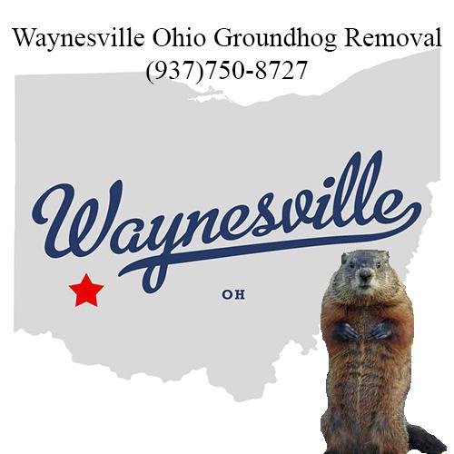 waynesville ohio groundhog removal