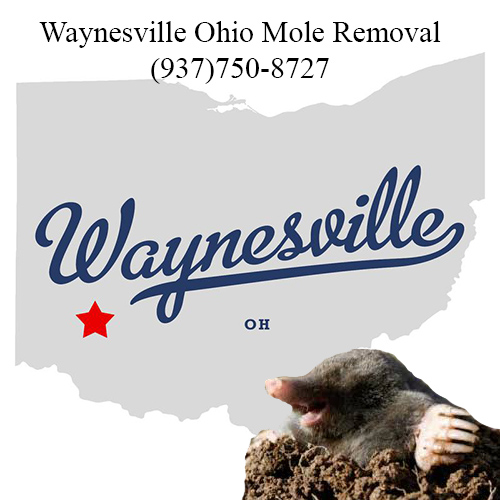 waynesville ohio mole removal