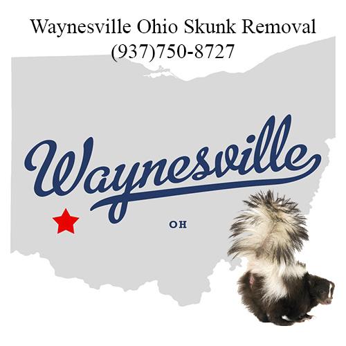 waynesville ohio skunk removal