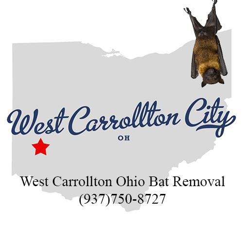 west carrollton ohio bat removal