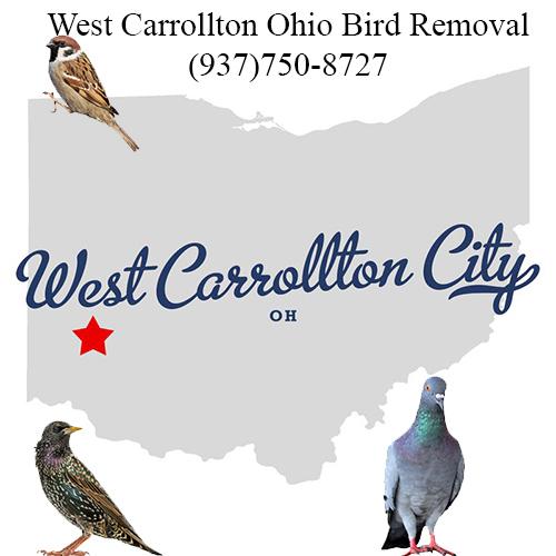 west carrollton ohio bird removal