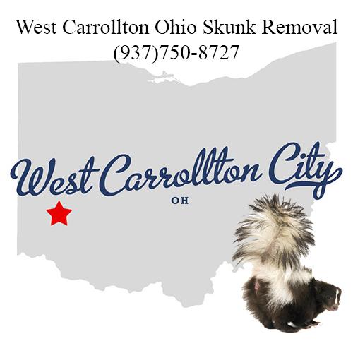 west carrollton ohio skunk removal