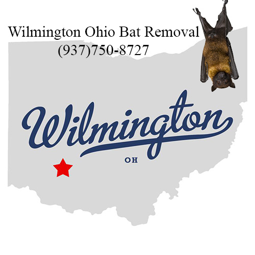 wilmington ohio bat removal