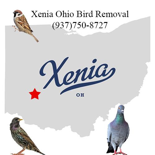 xenia ohio bird removal