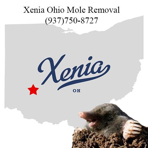 xenia ohio mole removal