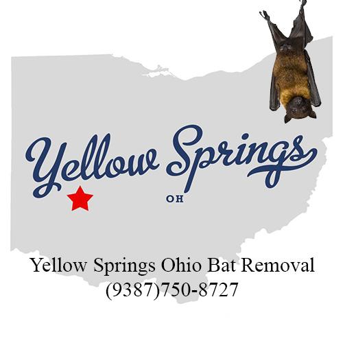 yellow springs ohio bat removal