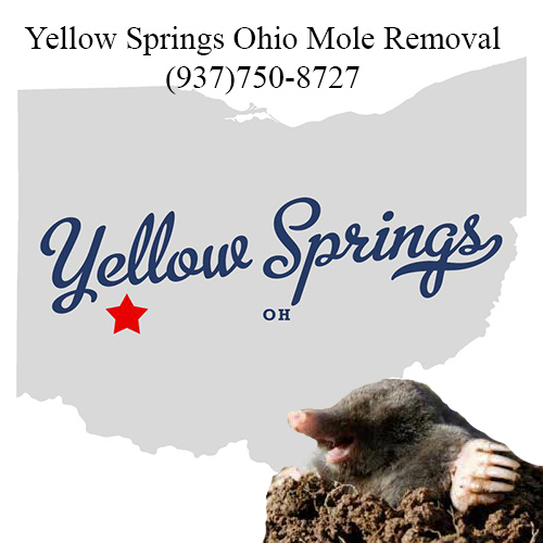 yellow springs ohio mole removal