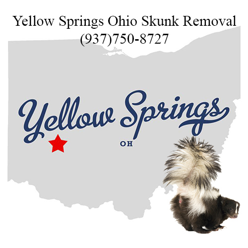 yellow springs ohio skunk removal
