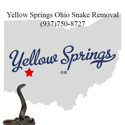 yellow springs ohio snake removal