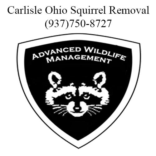 carlisle ohio squirrel removal
