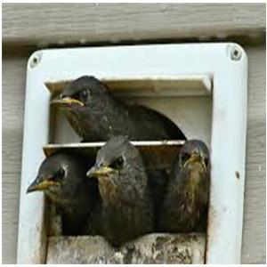 Dayton Ohio bird removal experts, Safe Humane Methods