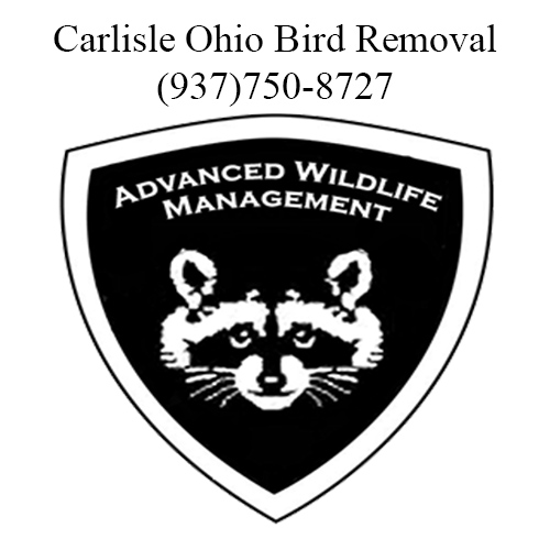 carlisle ohio bird removal