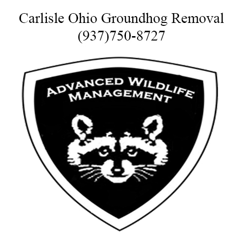 carlisle ohio groundhog removal
