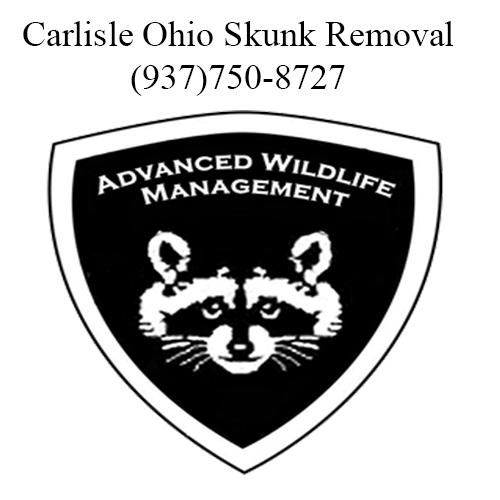 carlisle ohio skunk removal