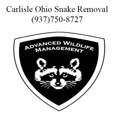 carlisle ohio snake removal