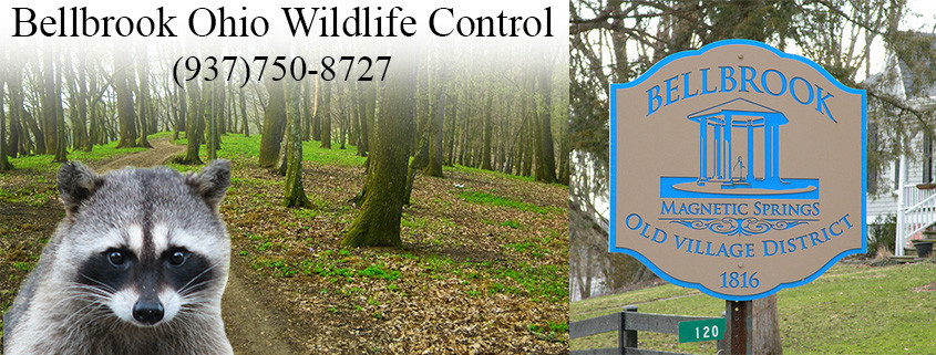 Belllbrook Ohio Wildlife Control