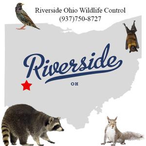 Riverside ohio wildlife control