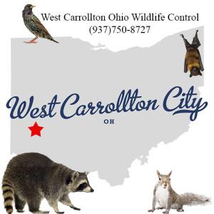 west carrollton ohio wildlife control