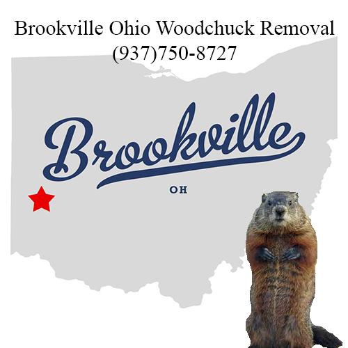 Brookville ohio woodchuck removal