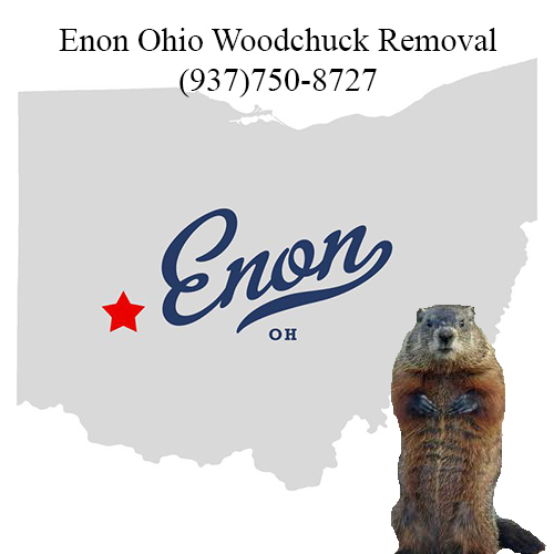 Enon ohio woodchuck removal