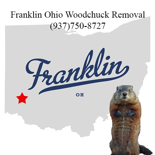 Franklin ohio woodchuck removal