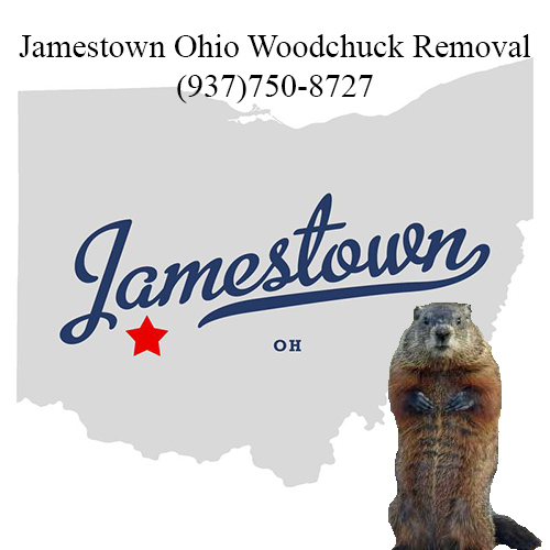 Jamestown ohio woodchuck removal