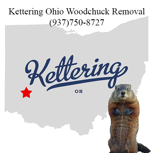 Kettering ohio woodchuck removal