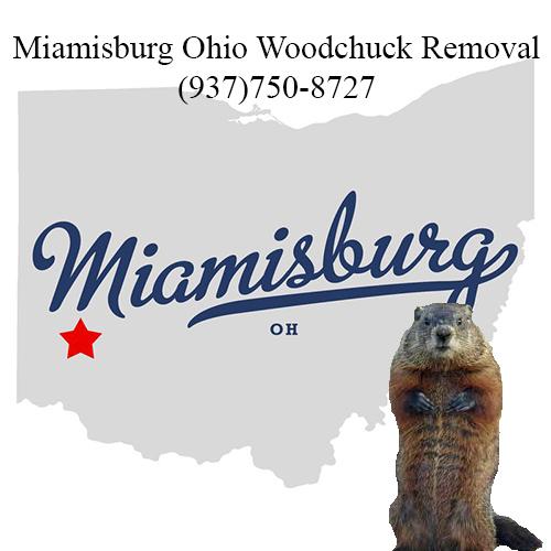 Miamisburg ohio woodchuck removal