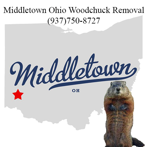 MIddletown ohio woodchuck removal