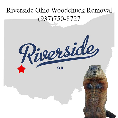 Riverside ohio woodchuck removal