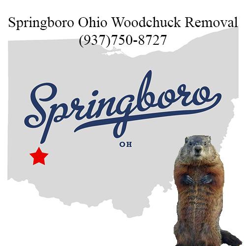 Springboro ohio woodchuck removal