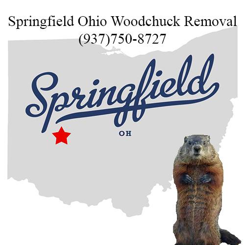Springfield ohio woodchuck removal