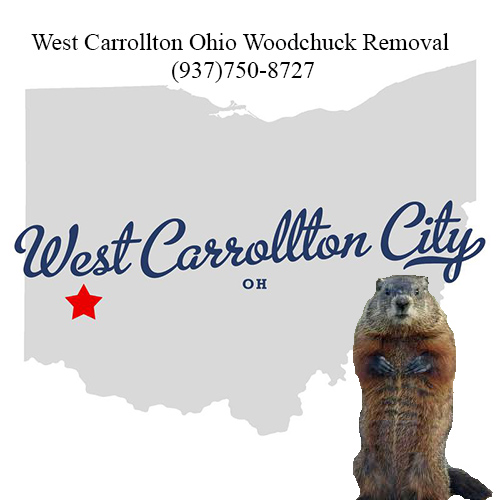 West carrollton ohio woodchuck removal
