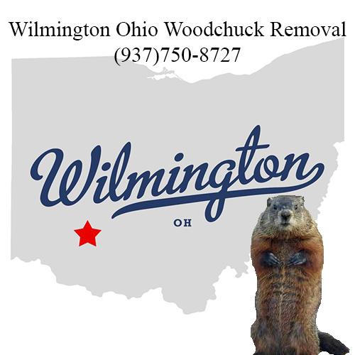 Wilmington ohio woodchuck removal