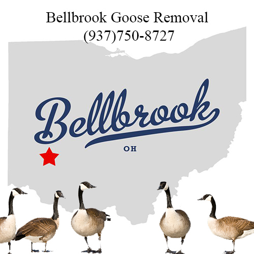 bellbrook ohio goose removal (938)750-8727