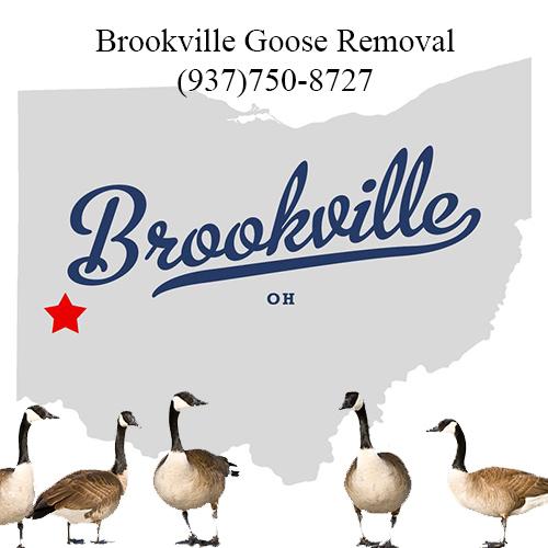 brookville ohio goose removal (937)750-8727